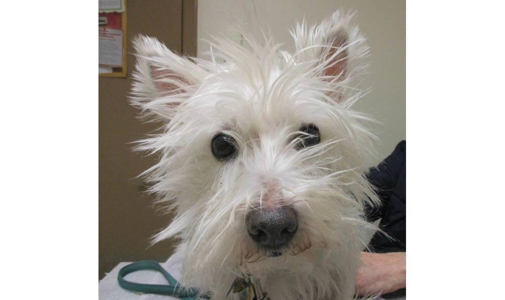 Pet dog at Cedarwood Veterinary Clinic in Santa Fe