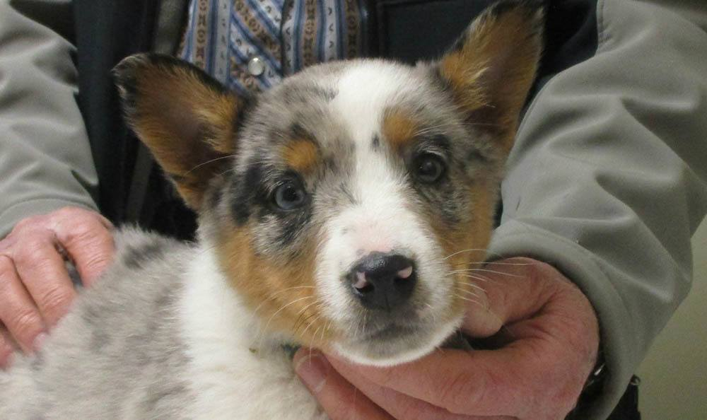 Puppy at Cedarwood Veterinary Clinic in Santa Fe