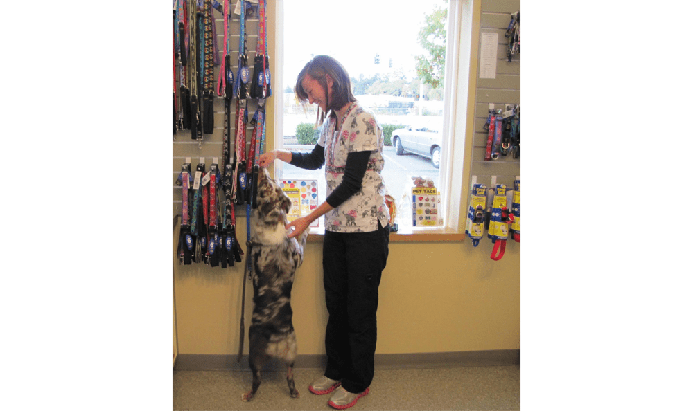 Chambers Creek Veterinary Hospital Retail