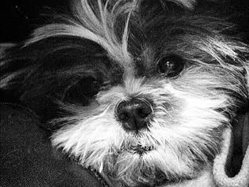 Pet at Riverside Veterinary Hospital - North