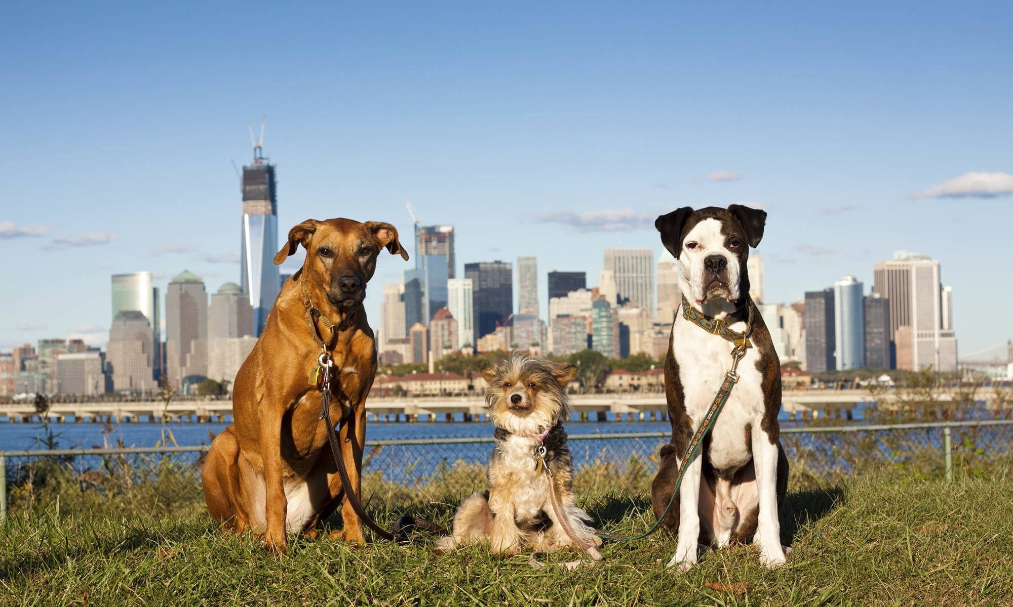 Veterinary Services in New York, NY