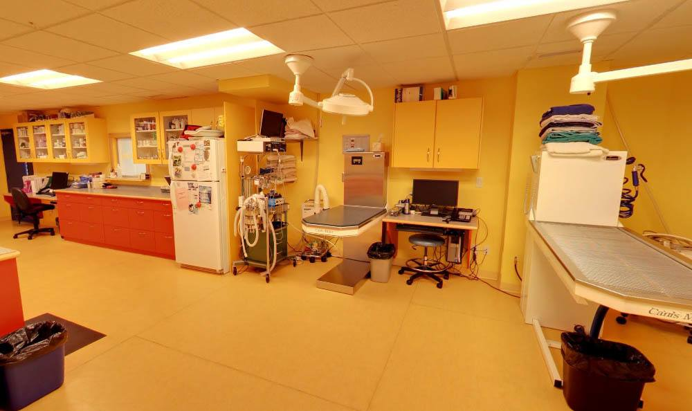 lab area at Animal Hospital in Kelowna