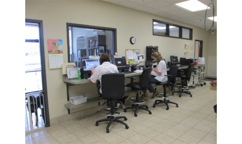 Our vets are hard at work at Eagle Animal Hospital