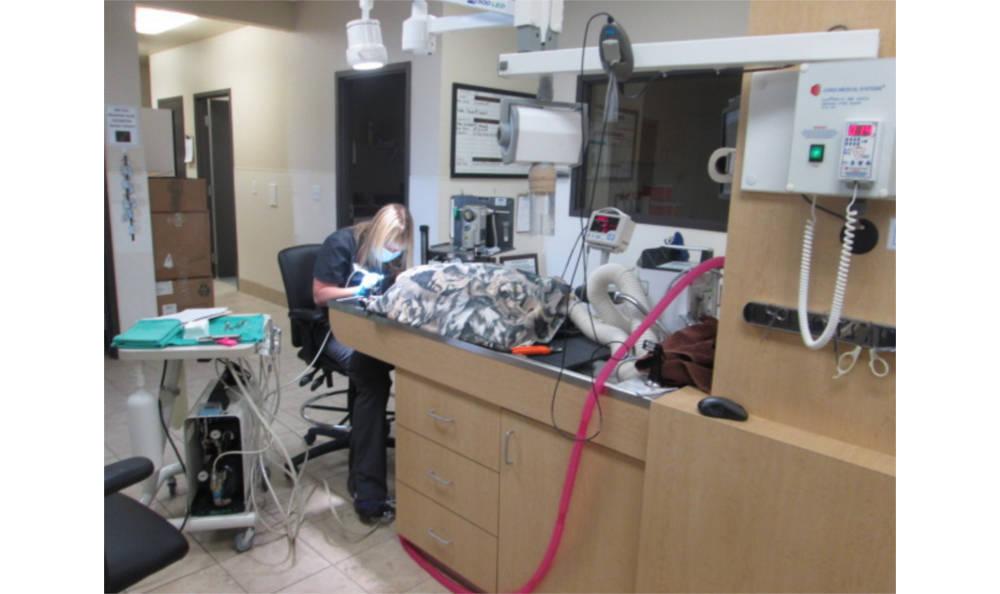 dentistry at Eagle Animal Hospital