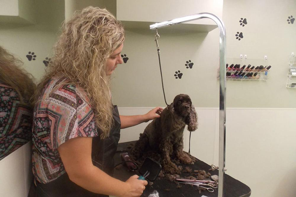 Photo of a dog after being groomed at Oak Pointe Veterinary Care