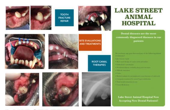 Dental Poster from Sumner Veterinary Hospital
