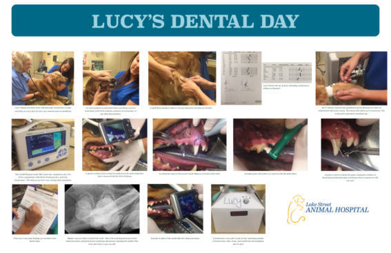 Lucy's Dental Day at Lake Street Animal Hospital