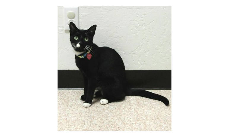 Pet Pic of black cat at Mesa Animal Hospital
