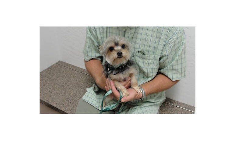 Pet Pic of dog in arms at Mesa Animal Hospital
