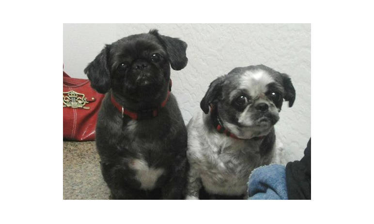 Pet Pic of two dogs at Mesa Animal Hospital