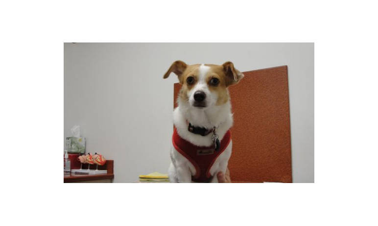 Mesa Animal Hospital Dog Pet Pic