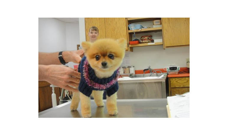 Pet Pic of puppy in sweater at Mesa Animal Hospital