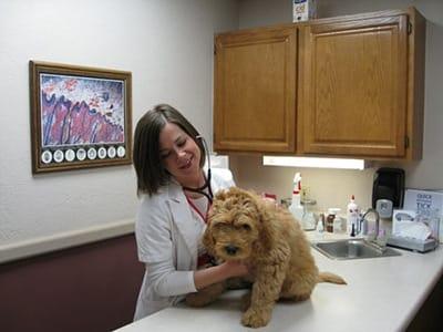 Exam Room at Animal Medical Center of Amarillo in Amarillo