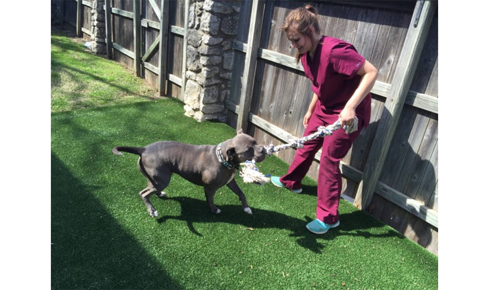 Friendly play between staff and patients at Veterinary Associates