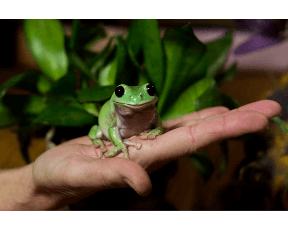 Gumby the Frog at Anchorage animal hospital