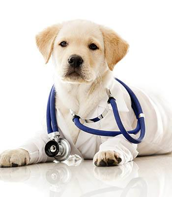 Animal Hospital in Scottsdale mission statement