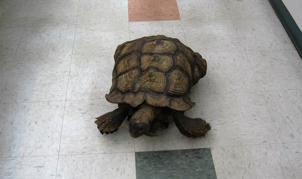 Turtle at Bradenton Animal Hospital