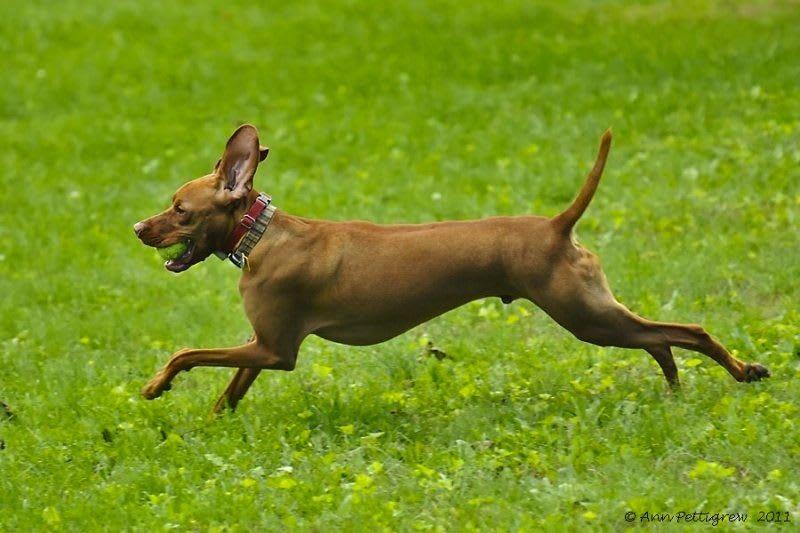 Becket the dog at York animal hospital
