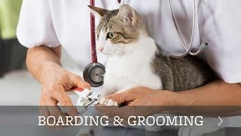 Boarding and grooming for your pets in Scottsdale