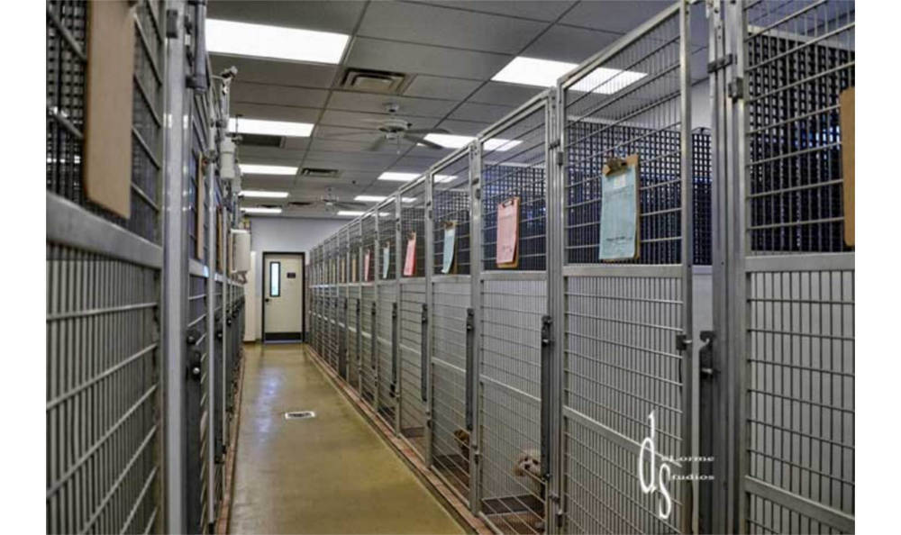 Our kennels at Pima North Animal Hospital