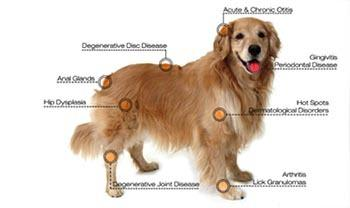 Laser therapy for dogs at Animal Medical Clinic - Wheaton