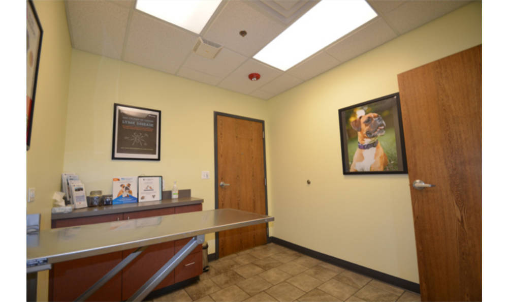 Animal Medical Clinic - Wheaton in an exam room