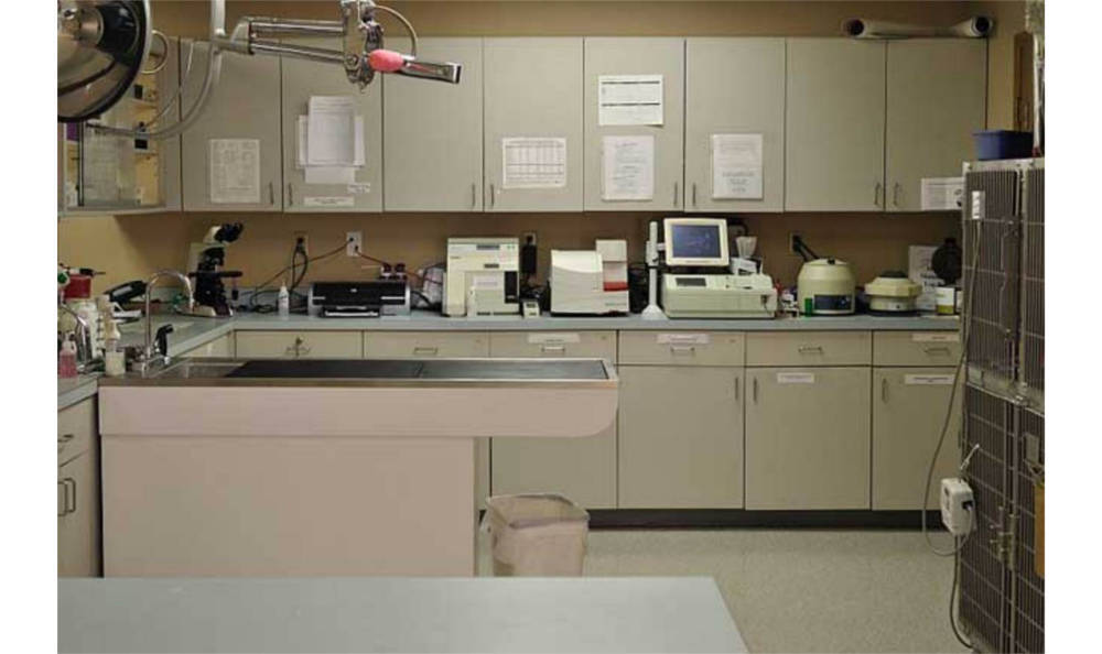 Lab at All City Pet Care Veterinary Emergency Hospital