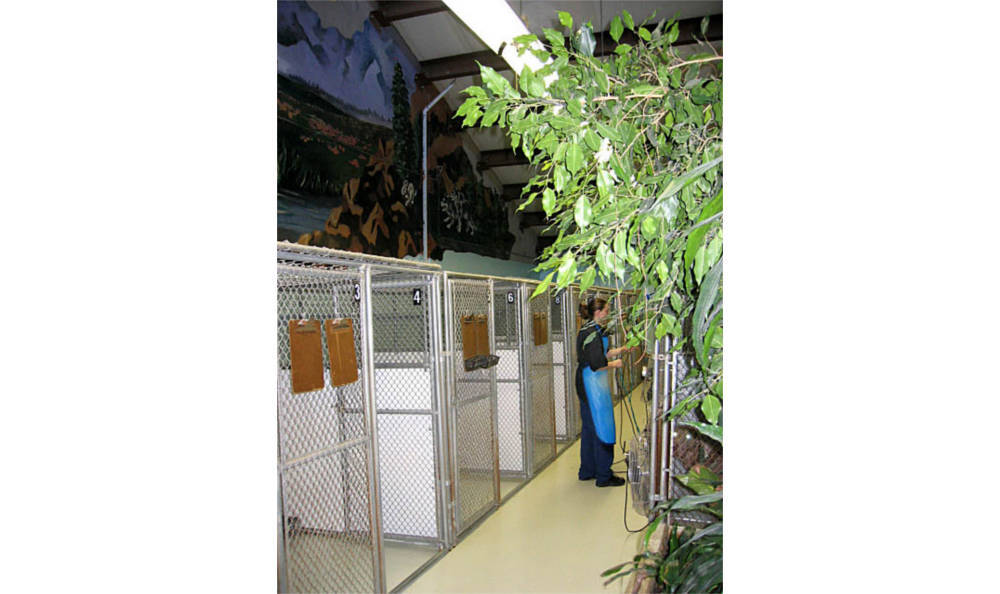Large kennels at Creature Comfort Animal Clinic