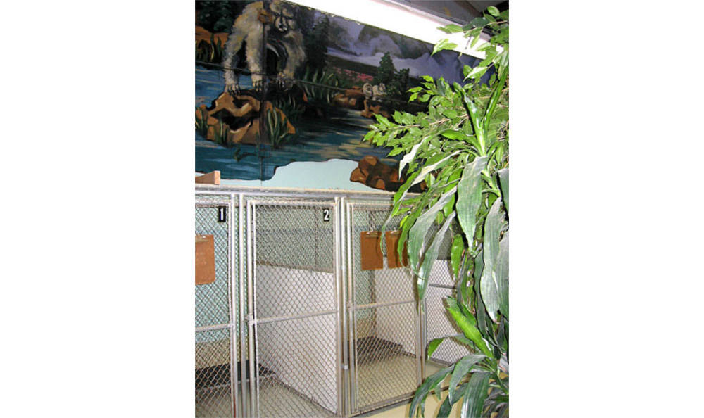 Creature Comfort Animal Clinic in the large kennel area