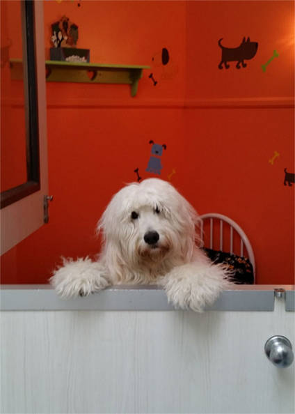Bella hanging out in the woof cottage Plaza Del Amo Animal Hospital & Pet Keeper