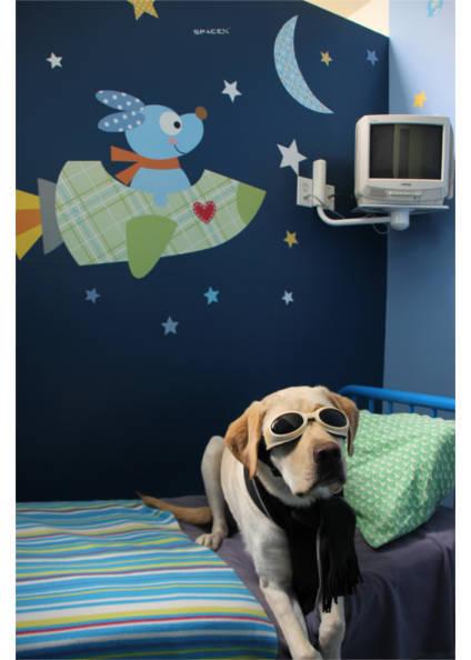 Logan in goggles at Plaza Del Amo Animal Hospital & Pet Keeper