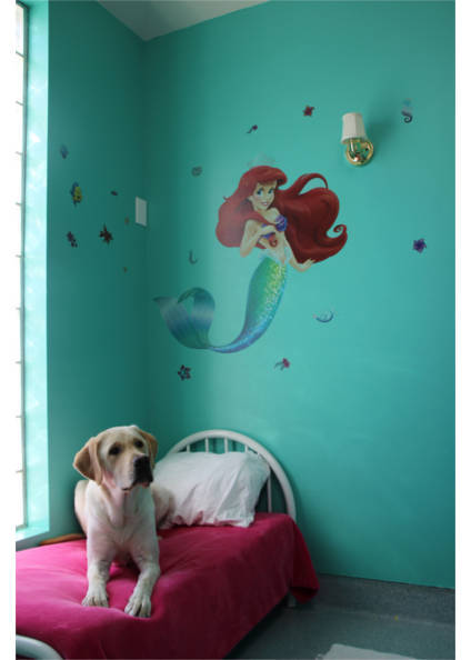 Logan on his bed in the mermaid room at Plaza Del Amo Animal Hospital & Pet Keeper