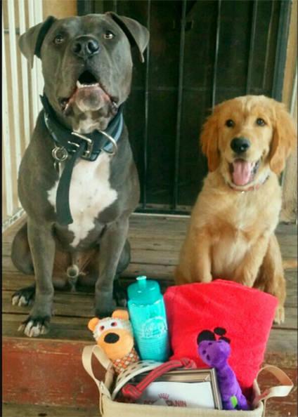 Roscoe and Waffles raffle winners at Plaza Del Amo Animal Hospital & Pet Keeper