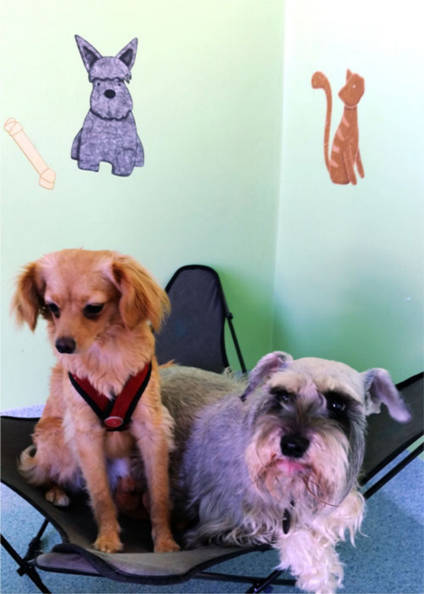 Sophia and Sadie enjoying their stay at Plaza Del Amo Animal Hospital & Pet Keeper