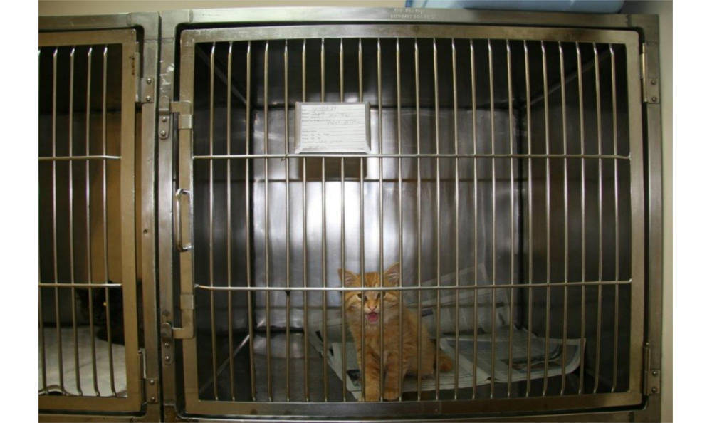 Kitten in the kennel at Northgate Small Animal Hospital
