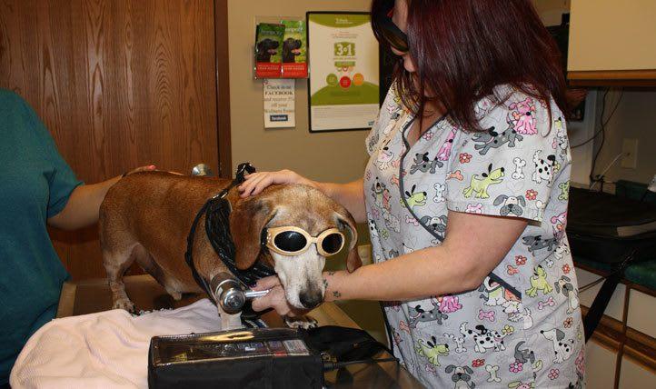 Exam at  Northgate Small Animal Hospital
