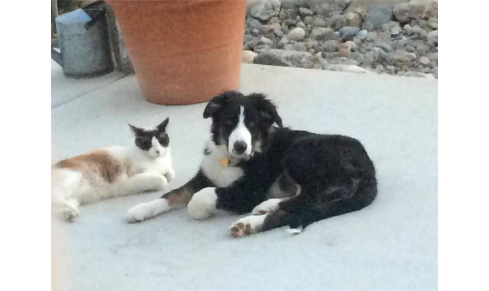 A cat and dog laying outside together at Vacaville animal hospital