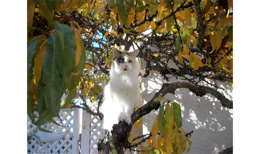 A cat hanging out in a tree at Vacaville animal hospital