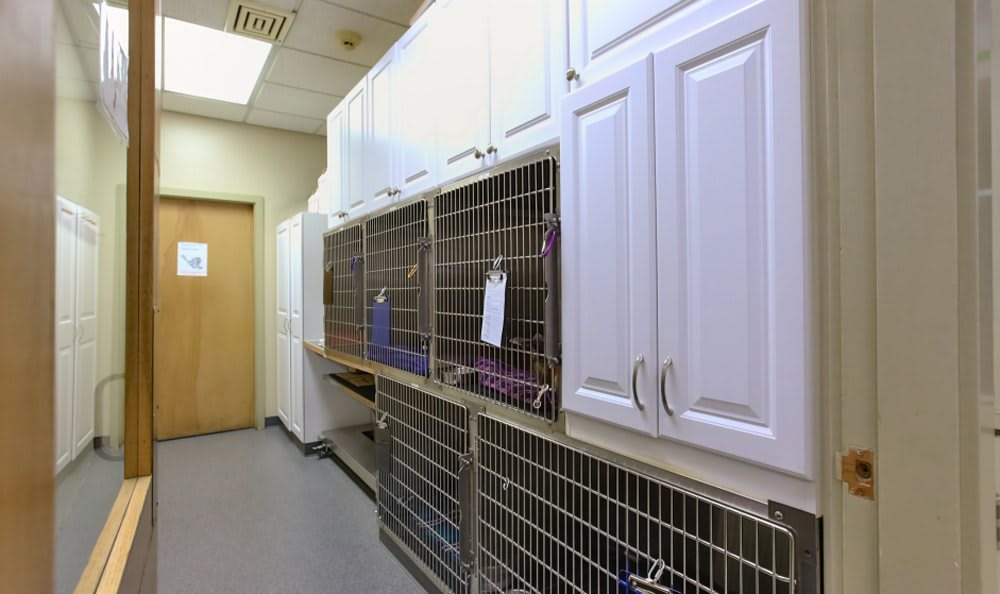 Feline Kennels  at Kitsap Veterinary Hospital