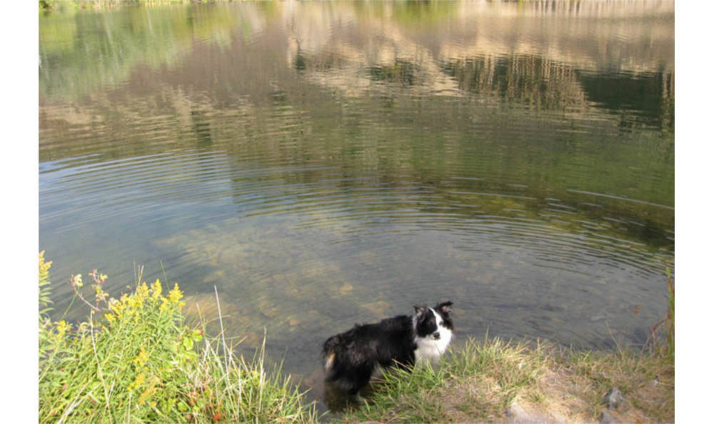 Dog in the water at Kitsap Veterinary Hospital in Port Orchard, Washington