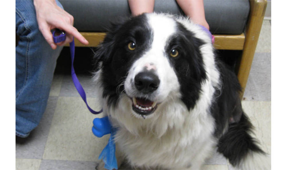 Dog on a leash at Kitsap Veterinary Hospital in Port Orchard, Washington