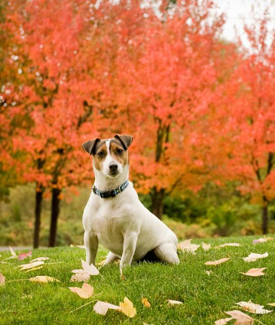 Managing your pet's health at Port Orchard Animal Hospital