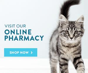 Tigard Animal Hospital | Tigard Veterinarian