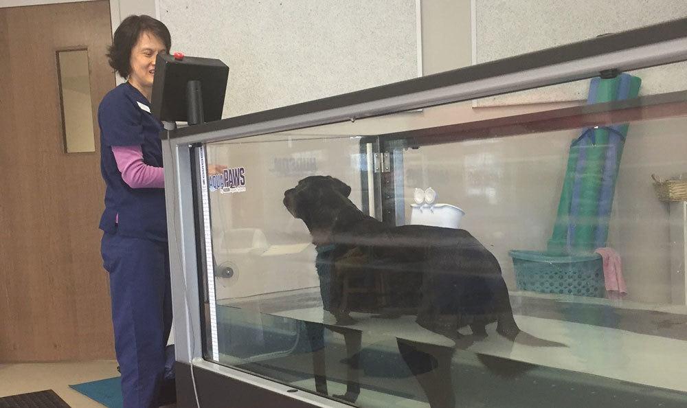 Rehab at Animal Hospital of Worthington
