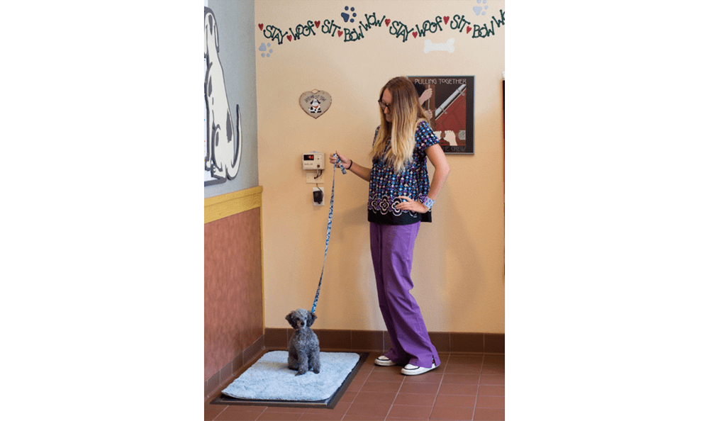 Fort Collins dog and vet