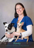 Mandy Stickle CVT at Friendship Hospital for Animals