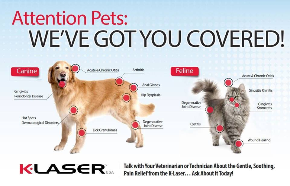 Pet Laser Therapy in Pacifica, CA