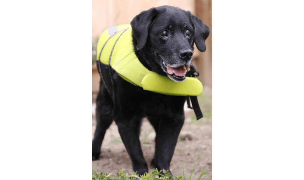 Doggie Life Jacket