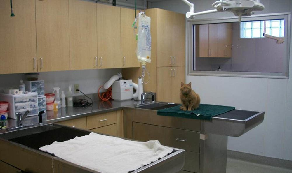 Thiensville-Mequon Small Animal Clinic examination area in Thiensville