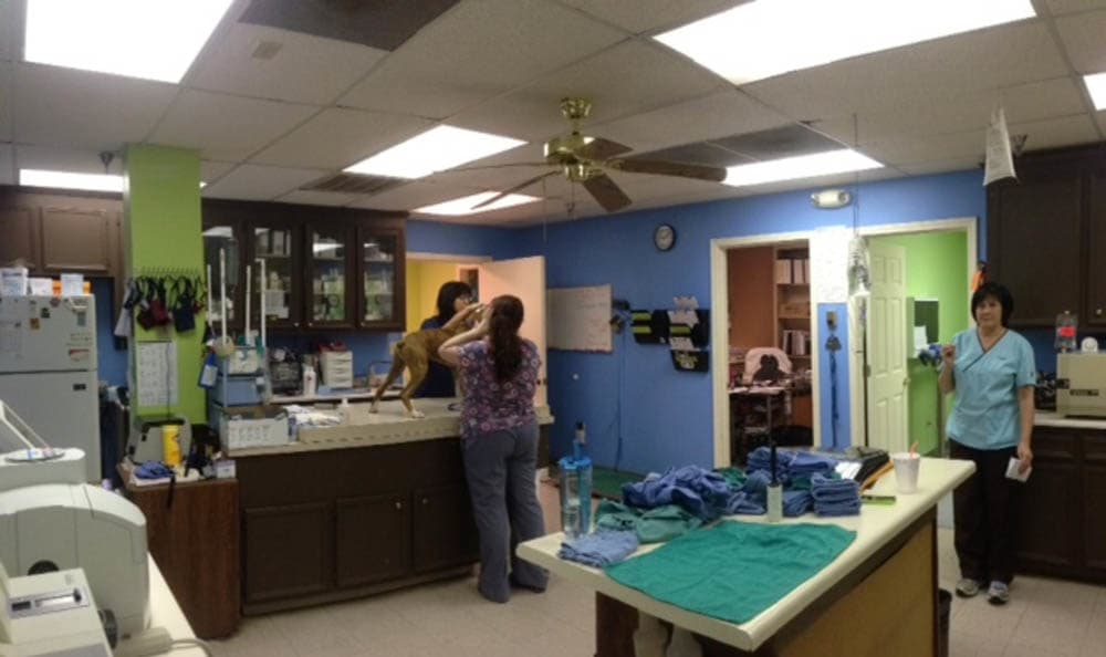 Northwest Rankin Animal Clinic Treatment Room In Flowood